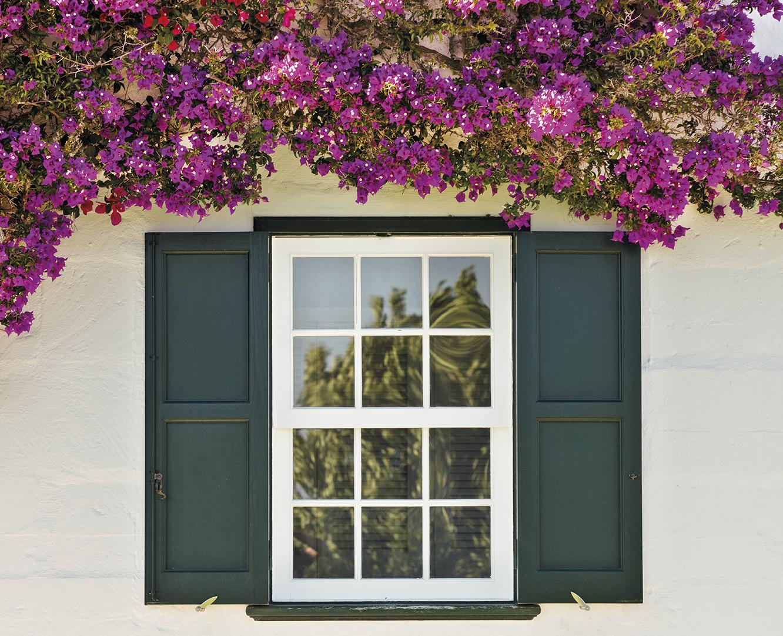 Ventana abierta en verano con plantes rosas alrededor.